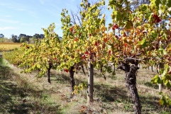 Deep Woods Vineyards